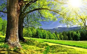 tree_sun